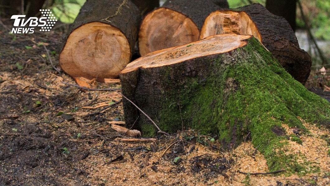 示意圖/TVBS 研究:森林砍伐 巴西減排目標開倒車