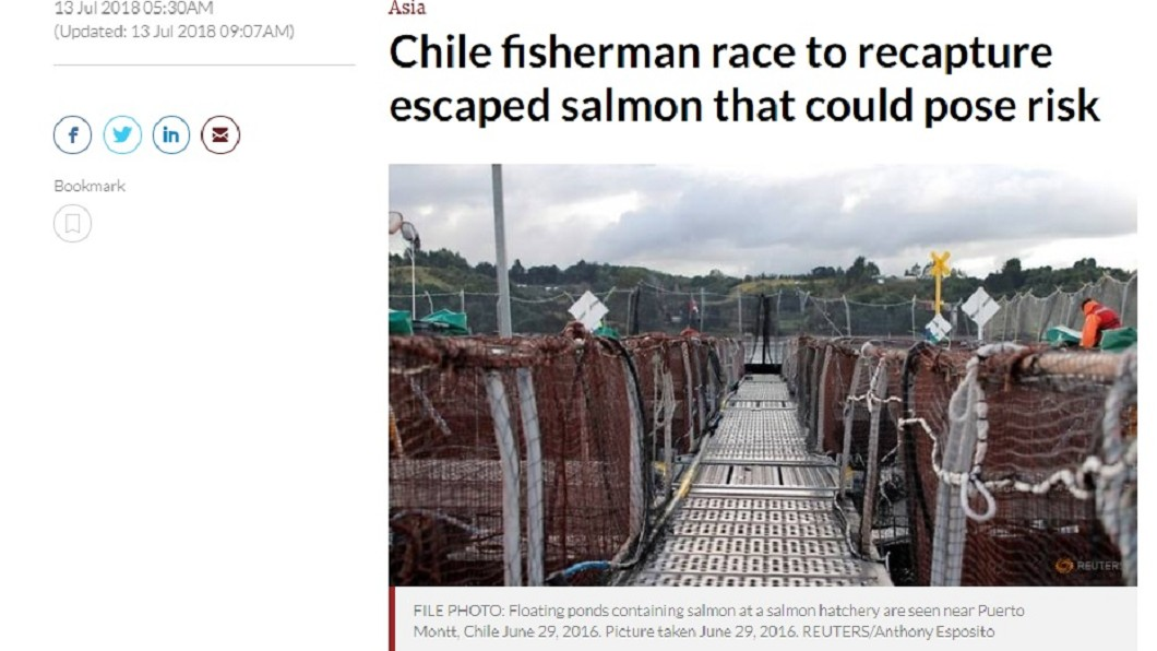 圖/翻攝自Channel NewsAsia 智利60萬鮭魚逃離漁場 環團憂生態浩劫