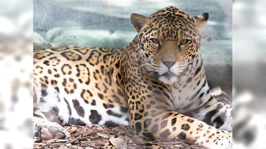 圖/翻攝自Audubon Zoo