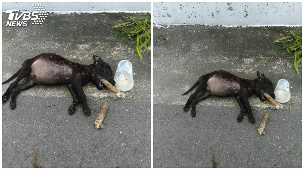 有民眾在嘉義布袋鎮一處公墓旁邊的道路,發現一隻小黑陳屍於此,嘴巴還插著枯枝。(圖/劉姓網友授權提供,請勿隨意翻拍) 慟!小黑幼犬來不及長大 陳屍公墓道路「枯枝插喉」