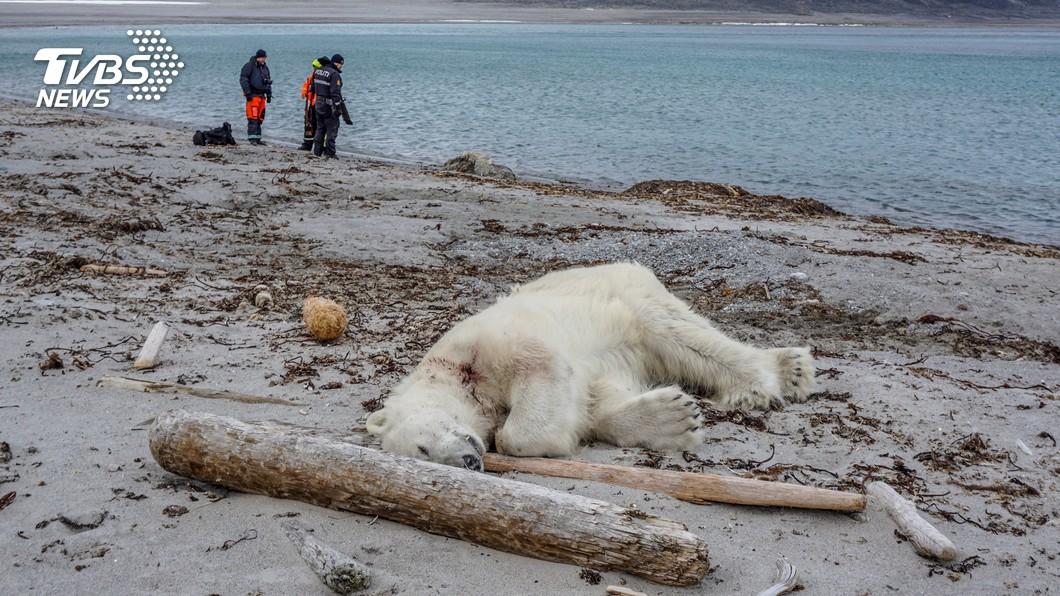 圖/達志影像路透社 觀光客湧北極 北極熊傷遊船警衛遭擊斃