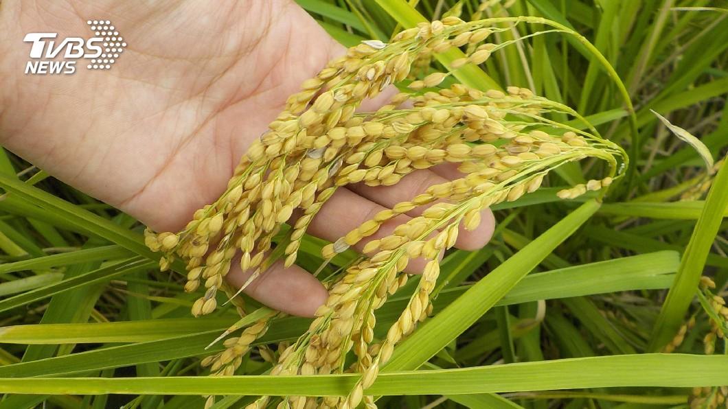 圖/中央社 畜牧排泄物再利用 稻作蔬果產量增加