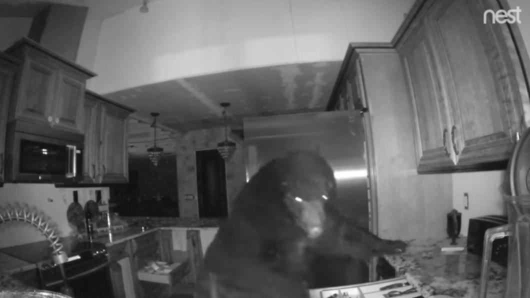 圖/翻攝自Colorado Springs Gazette YouTube 大黑熊闖廚房撒野 95歲嬤直接「罵走牠」