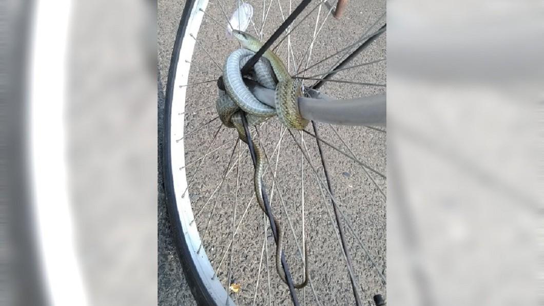 圖/翻攝自 推特 嚇傻!腳踏車被「蛇頭鎖」八字纏繞 網笑:天然防盜