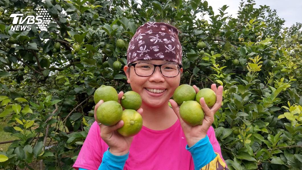 圖/中央社 婚變返鄉種安全檸檬 單親媽黃靖惠樂當青農