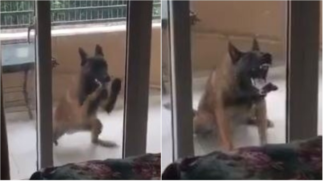 圖/翻攝自花蓮同鄉會 「我是奶奶啊」 黑狗露尖牙狂敲門超像大野狼