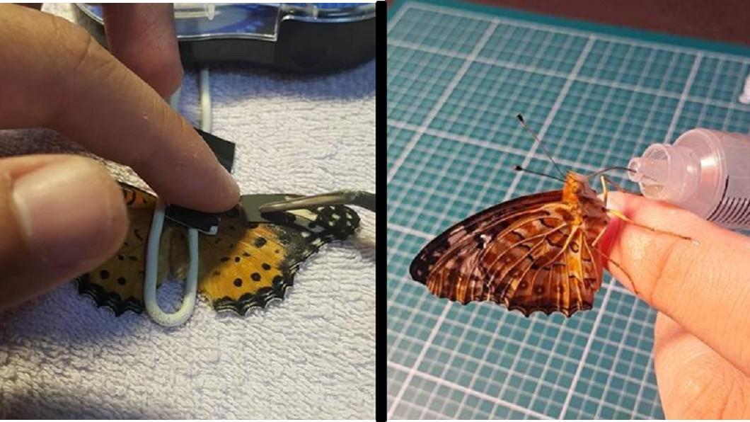 圖/翻攝dispatch 翅膀殘缺剩一半!他幫「動手術」蝴蝶又能飛了