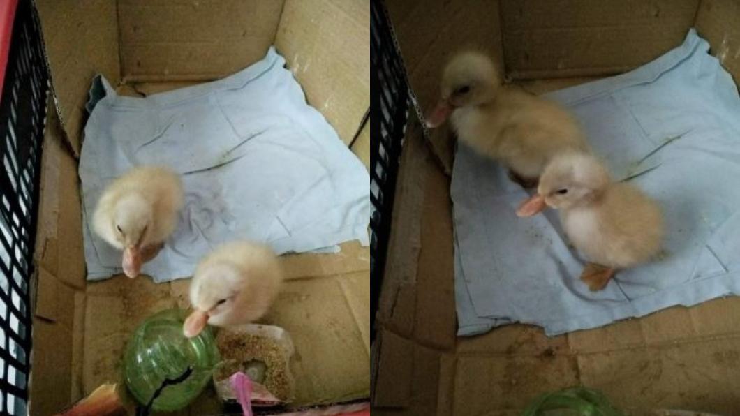 翻攝/爆廢公社 鳥蛋破了!她拿冰箱裡的「鴨蛋」頂替 沒想到竟孵化成功