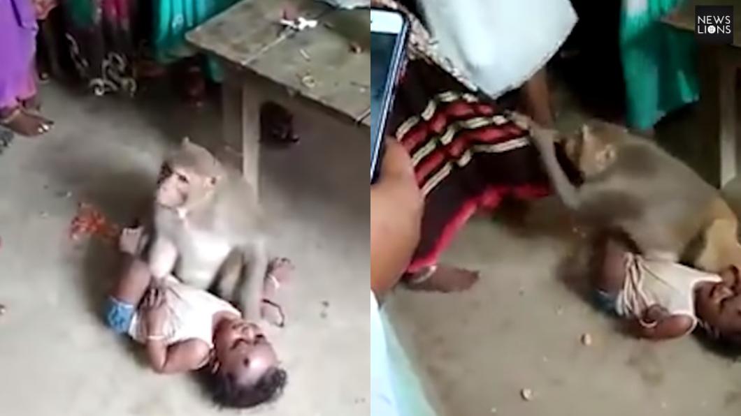 圖/翻攝自YouTube 潑猴強擄男嬰「不准他人接近」 母親救兒慘遭撕咬攻擊