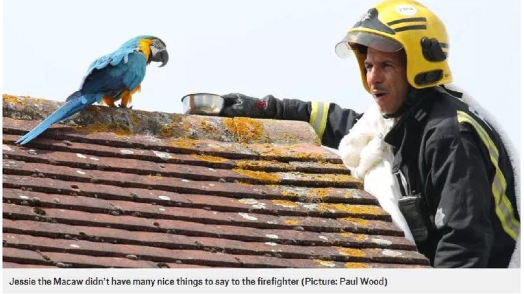 圖/翻攝自Metro 尷尬了!鸚鵡卡屋頂3天 獲救還譙消防人員