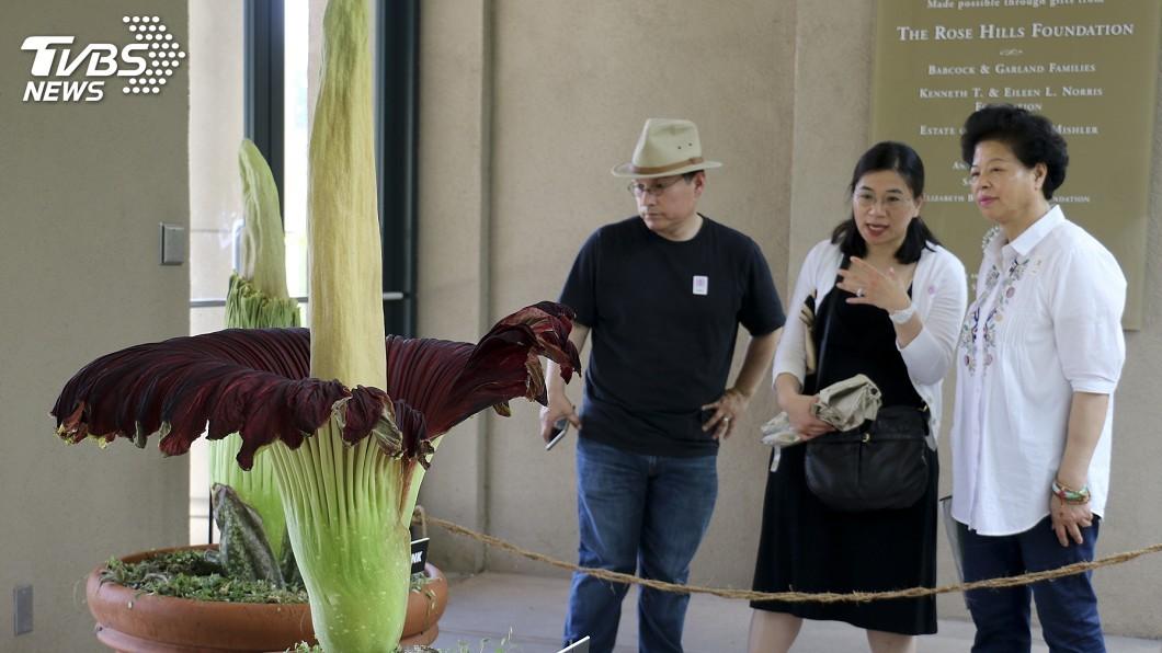 圖/達志影像美聯社 一起來聞臭!圖書館「屍花」將盛開 植物迷好興奮