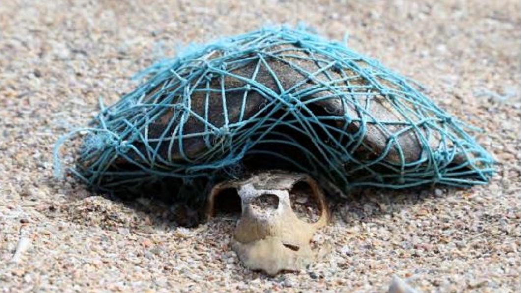 圖/翻攝自Blue The Film 屍身已腐化…海龜橫死海灘 「鬼網」仍緊緊纏繞