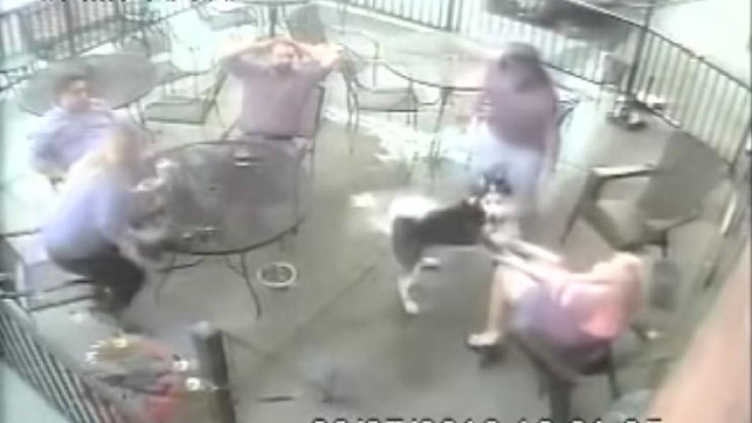 圖/翻攝自Denver7 – The Denver Channel YouTube 「月月」狠咬模特兒臉險失明 飼主竟落跑