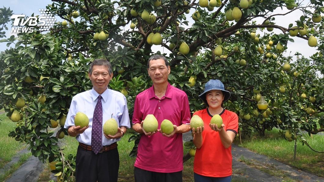 圖/中央社 妻曾遭農藥毒暈 柚農轉型有機栽培成功