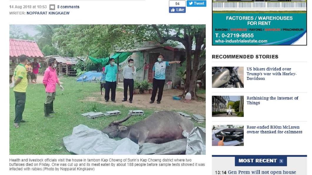 圖/翻攝自Bangkok Post 驚!全村人分食暴斃牛隻 下肚後才知有「狂犬病」