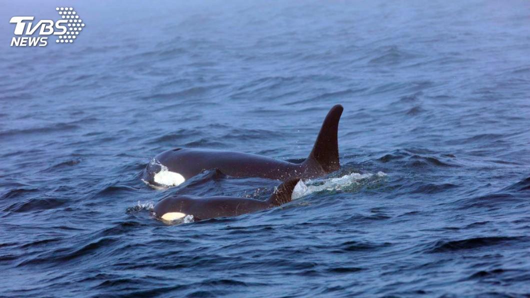 科學家證實,海軍聲納是導致鯨魚擱淺死亡的主因。示意圖/達志影像美聯社 讓鯨魚「腎上腺素」飆升大腦出血 海軍是兇手!
