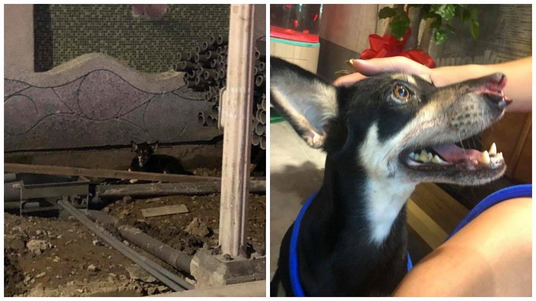 Lulu被發現時鼻子疑似有刀傷。(圖/翻攝自臉書粉絲團「浪浪別哭」)