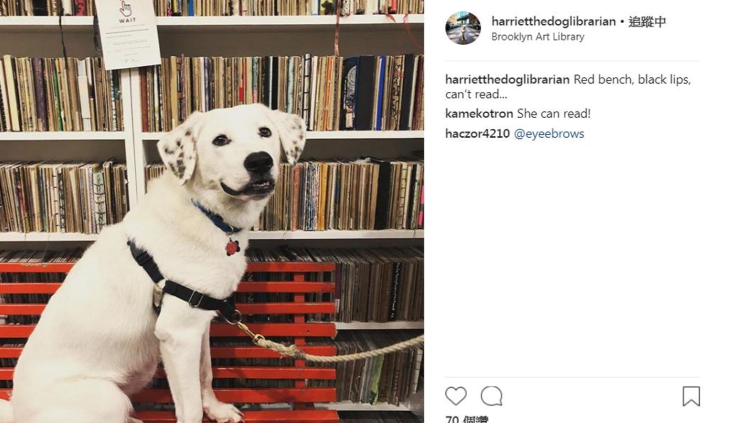 海芮人氣旺,有自己的IG帳號。圖/圖書館instagram