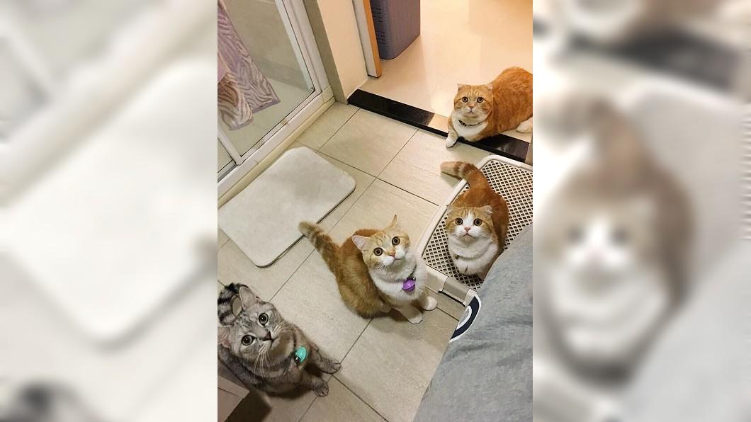 圖/翻攝自爆怨公社臉書 「不用貓砂?」4位主子監督上廁所 奴才:壓力好大