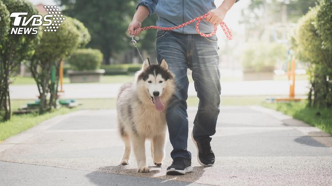 示意圖/TVBS 別棄養毛孩! 無證據顯示犬隻會感染新冠病毒