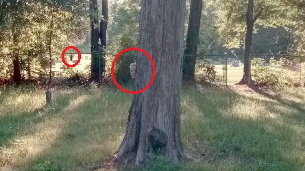 圖/翻攝自Google Map網站 悚!谷歌街景驚見詭異照 墓園樹後躲灰臉小女孩