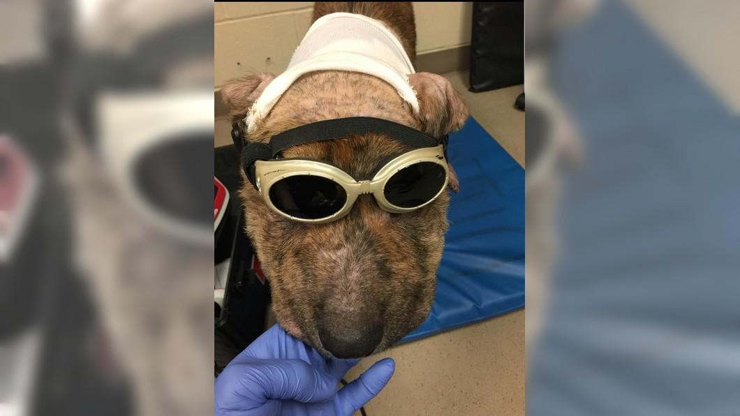 Gus手術順利,頭部腫脹也逐漸消失。圖/翻攝自臉書「Gus' Journey」