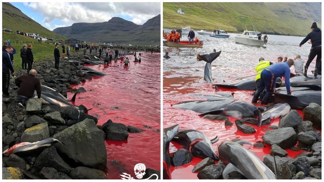 圖/翻攝自「Sea Shepherd UK」臉書