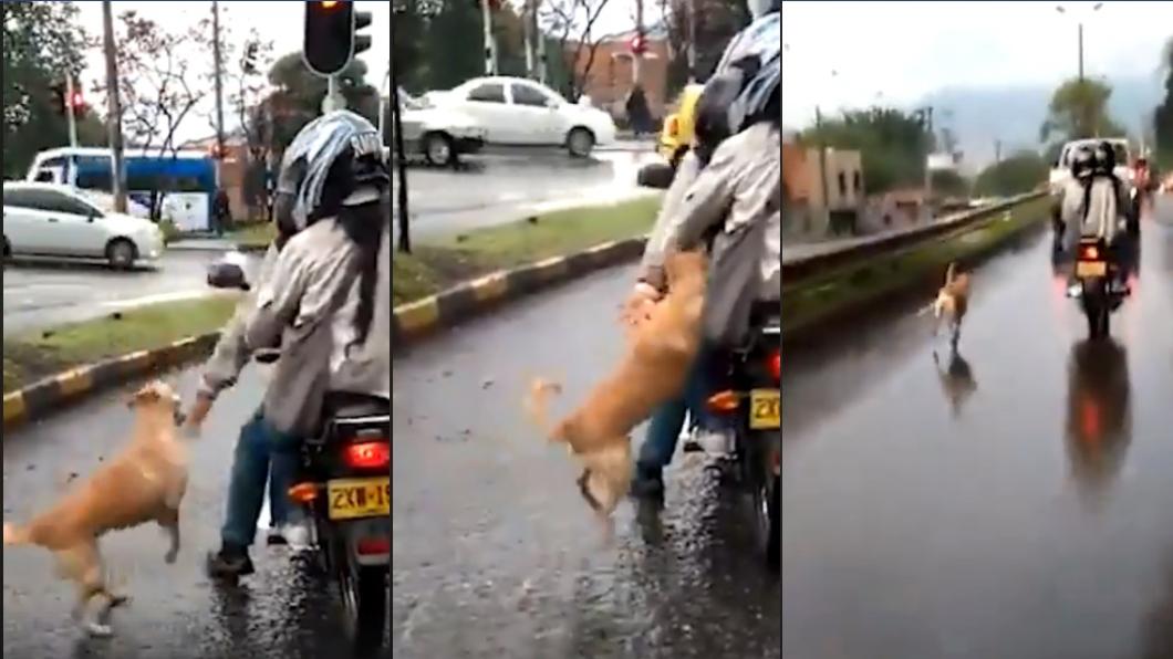 圖/翻攝自Curiosidades del Mundo臉書 小狗遭棄養「馬路上死命追」 情侶揮手要牠滾