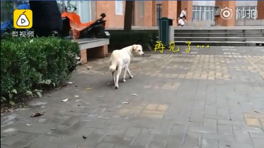 狗媽媽最後不捨地回頭一瞥,讓許多看到影片的網友都不捨地哭了。(圖/翻攝自梨視頻)
