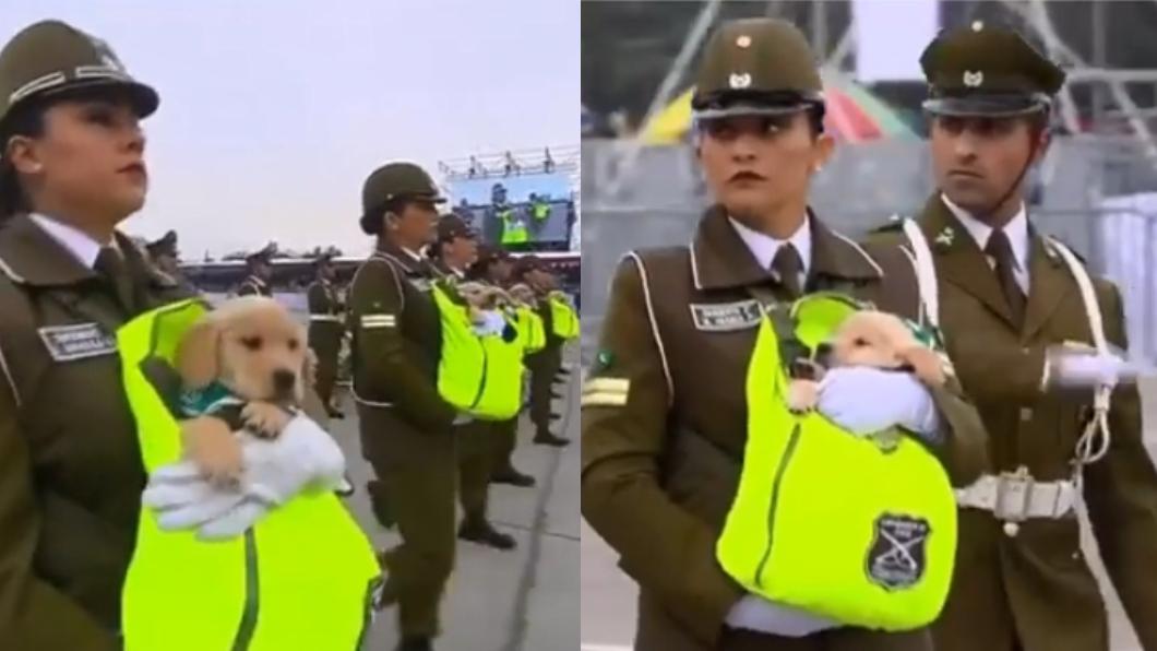 圖/翻攝自Carabineros de Chile臉書影片 智利國慶警犬寶寶萌翻天 網讚:女警竟還憋得住!