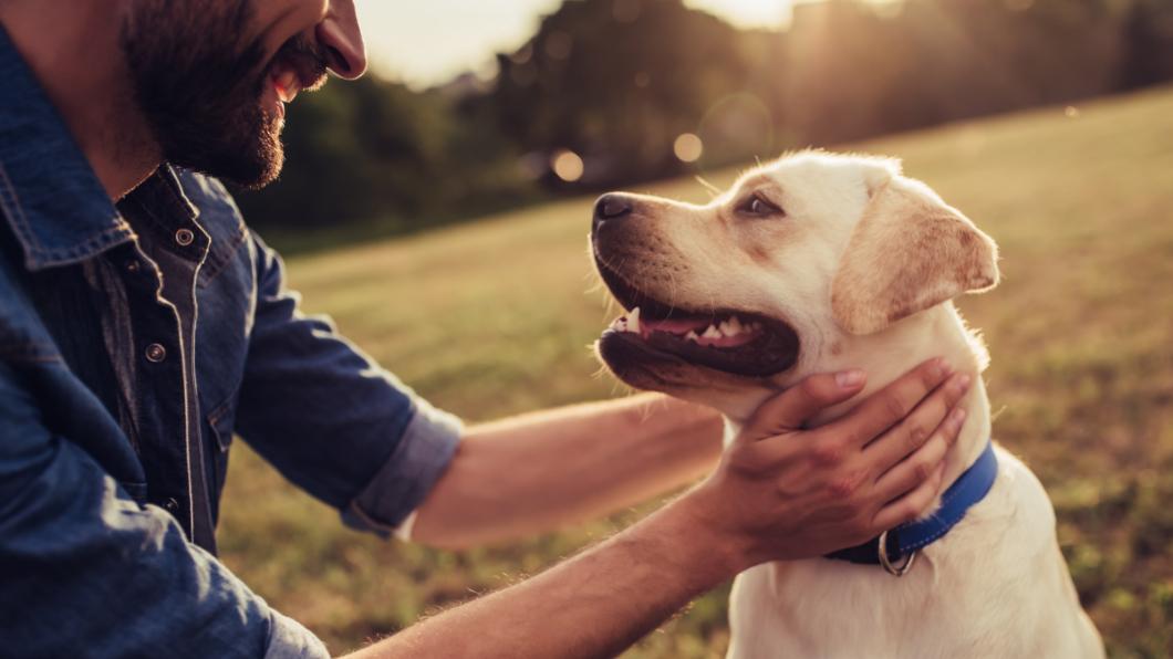 飼主稱不懂法律,8萬多罰鍰因此撤銷。示意圖/TVBS 「不知道」須幫愛犬結紮打疫苗 男挨罰8.3萬