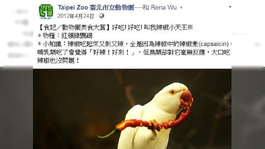 臺北市立動物園解釋鸚鵡吃辣。圖/翻攝自Taipei Zoo 臺北市立動物園臉書