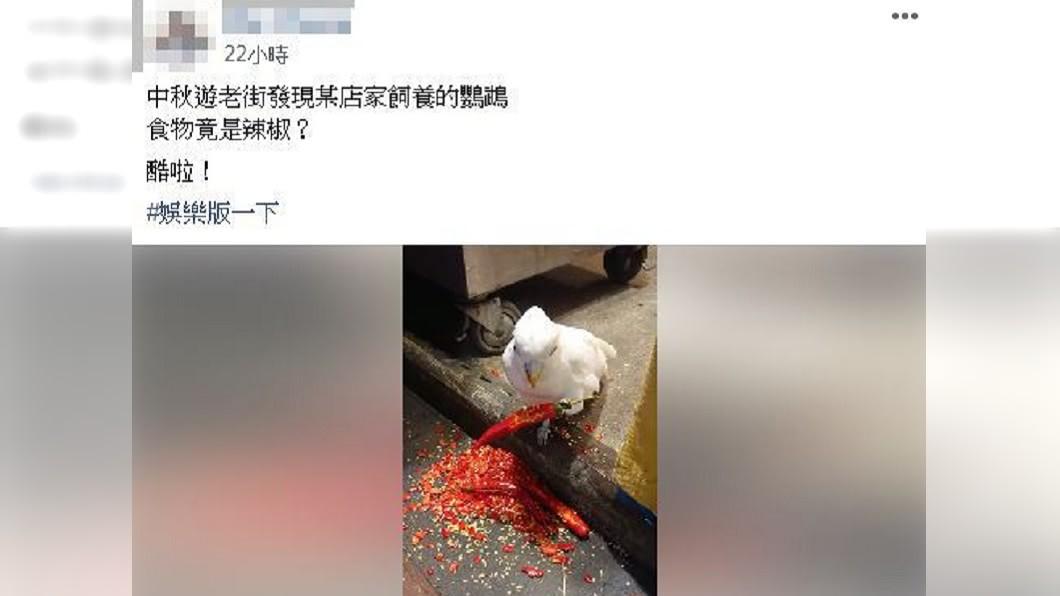 網友在爆料公社分享吃辣椒的鸚鵡。圖/翻攝自爆料公社