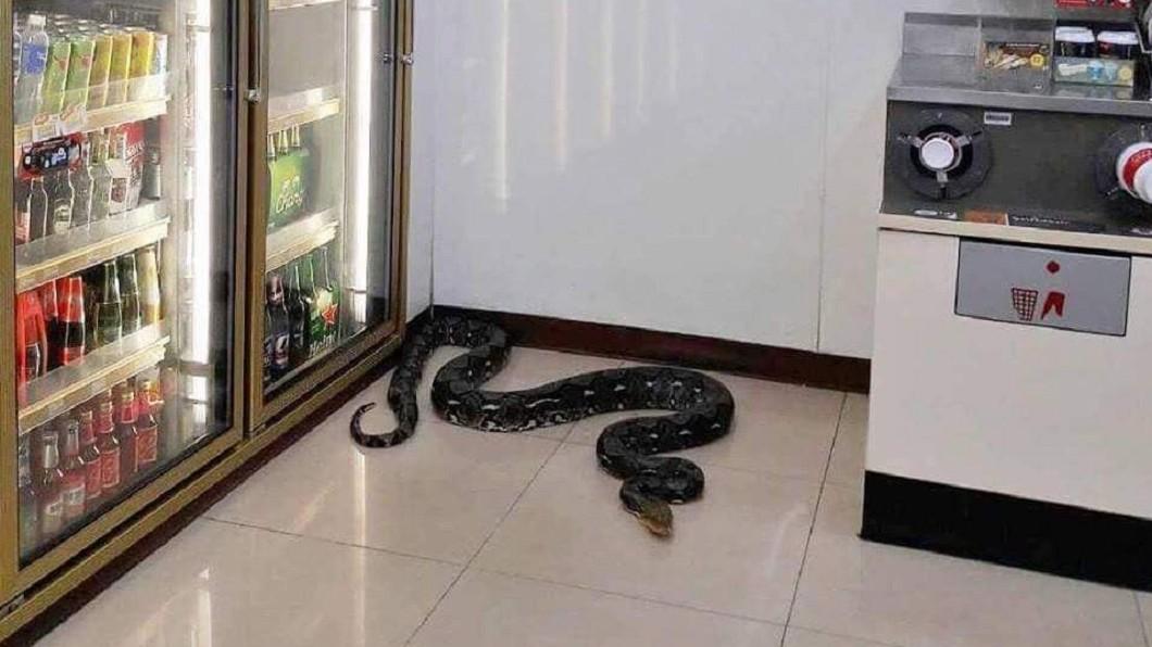 圖/翻攝自7-Eleven Thailand臉書 蛇精化身?超商驚現黑色巨蟒 卻不見入侵蹤跡