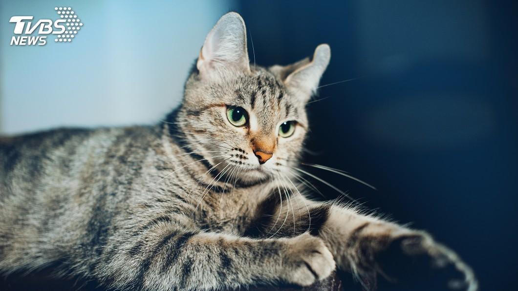 示意圖/TVBS 「三手菸」好毒! 可能害寵物得癌症