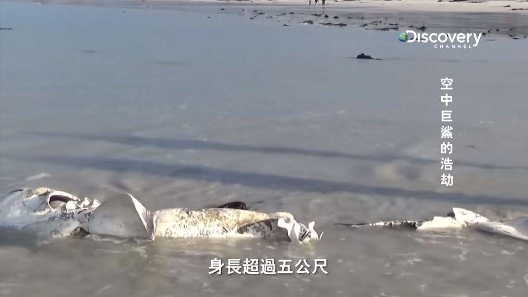 超過5公尺長的大白鯊被咬爛漂上岸邊。圖/翻攝自YT,Discovery頻道