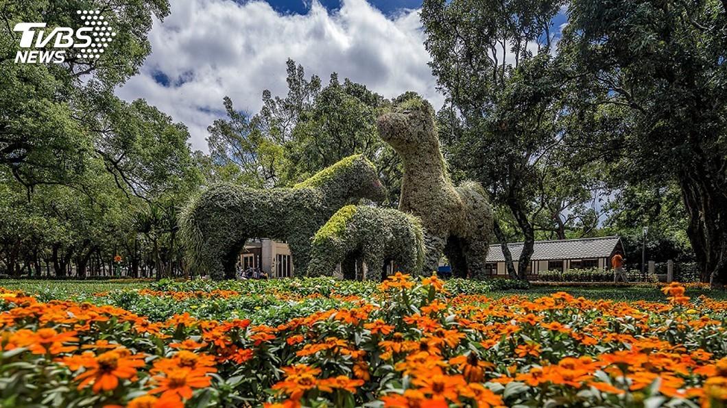 圖/中央社 阿拉伯馬「綠雕」超吸睛 成花博園區打卡夯點