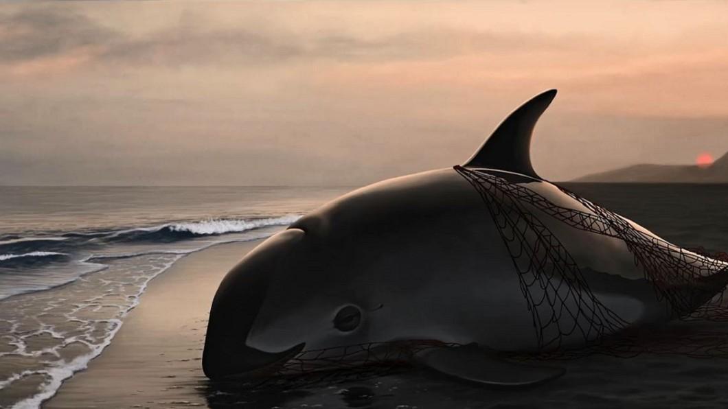 圖/翻攝自VitenClips YouTube 生態悲歌!稀有小海豚僅存「12隻」 明年恐滅絕