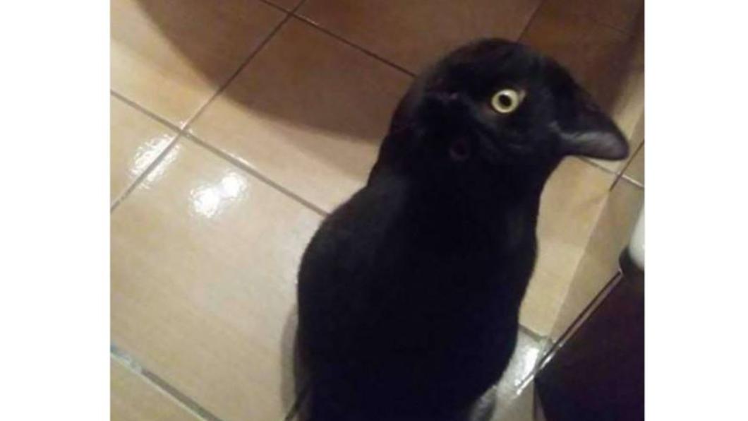 翻攝自/Twitter 你怎麼看!黑貓還是烏鴉?這張照片連Google都搞混