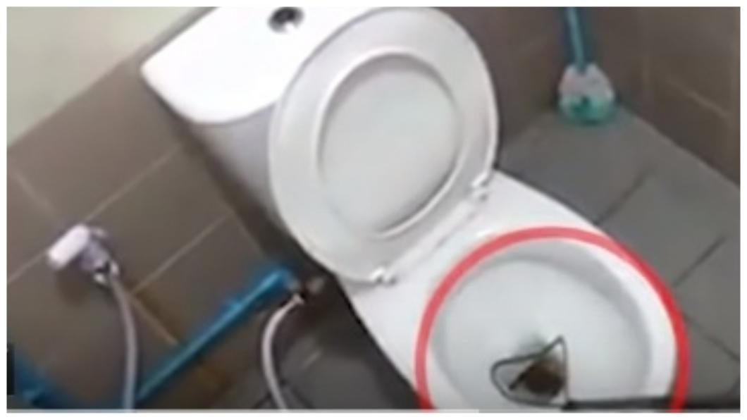蟒蛇躲藏在馬桶裡,造成1名男子下體遭咬傷。圖/翻攝自Thairath YouTube