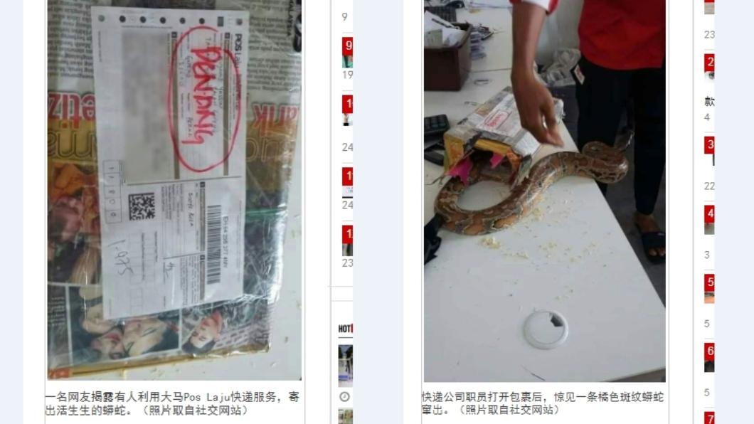 網友po照有人竟想以宅急便寄出蟒蛇。圖/翻攝自《中國報》 用宅急便寄大蟒蛇 突竄出嚇壞快遞員