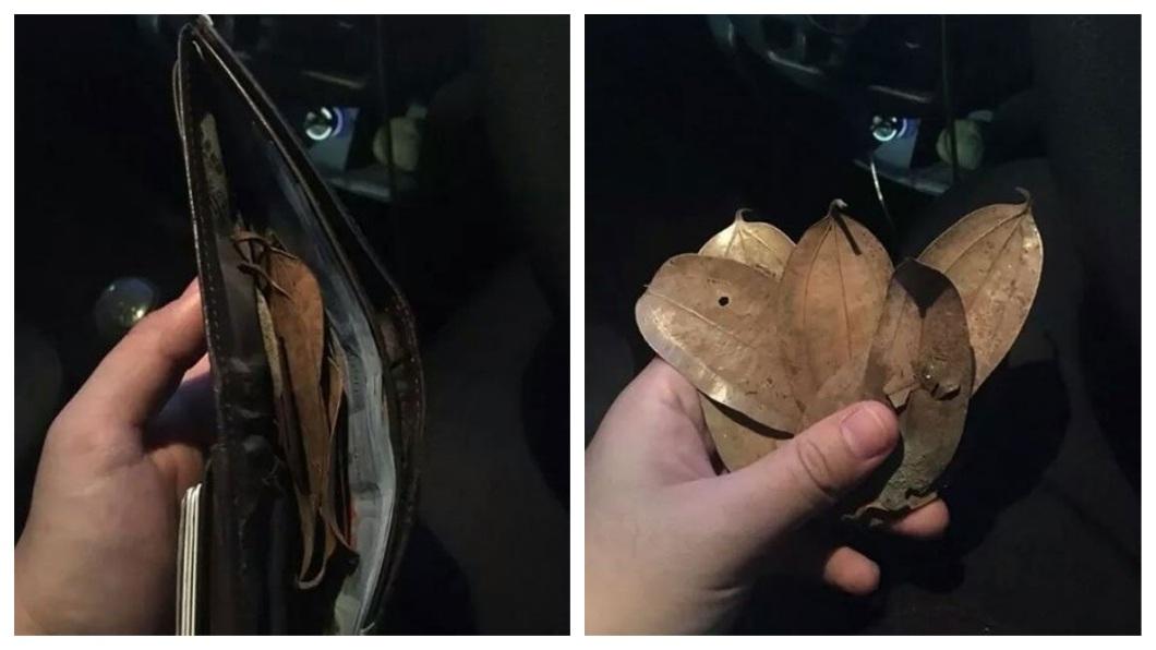 馬來西亞一名司機日前載客後清點當天收入,皮包內竟然有8片樹葉。(圖/翻攝自中國報) 驚!司機載到「鬼乘客」 車資變成8片樹葉