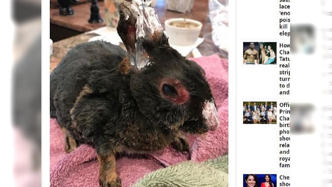 圖/翻攝自Daily Mirror 慎入!加州野火動物大逃亡 牠們被燒成這樣...