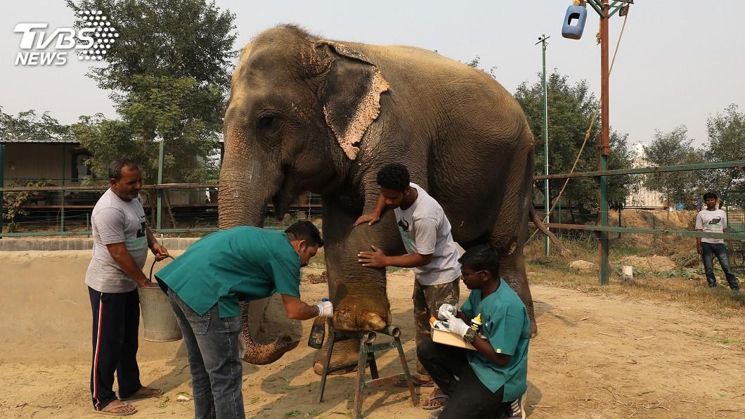 圖/達志影像路透社 印度設立首間大象醫院 盼減少生存威脅