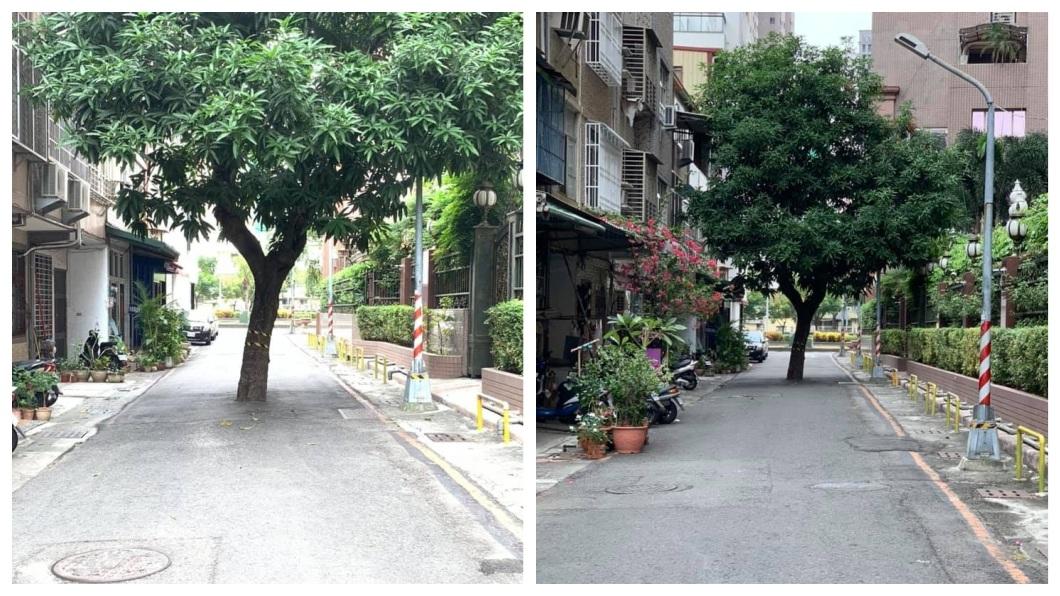高雄市區一處巷弄內出現最狂路霸,整棵樹直接擋在路中央。(圖/翻攝自爆廢公社) 移它得花4千萬 樹長路中央成「最狂路霸」