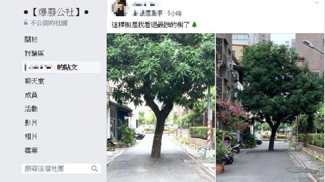 這棵樹被網友戲稱是最跩的樹。(圖/翻攝自爆廢公社)