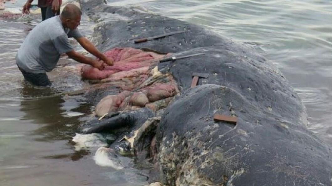 圖/翻攝WWF-Indonesia推特 體內藏6kg垃圾!死鯨胃塞115個塑膠杯 保育員痛心