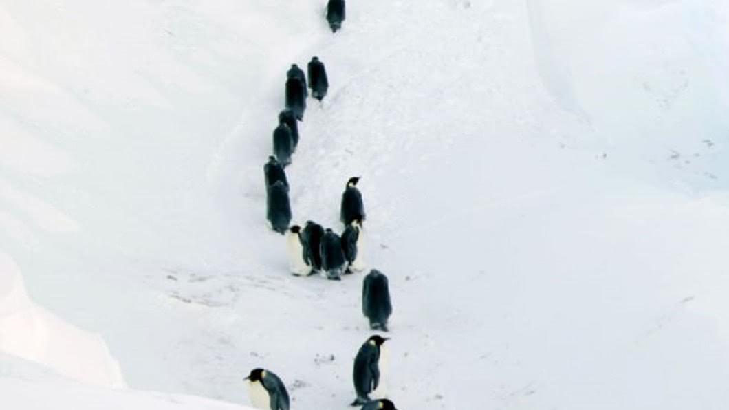 圖/翻攝Youtube 目睹企鵝凍死…紀錄片拍下人性 忍淚出手干預自然界