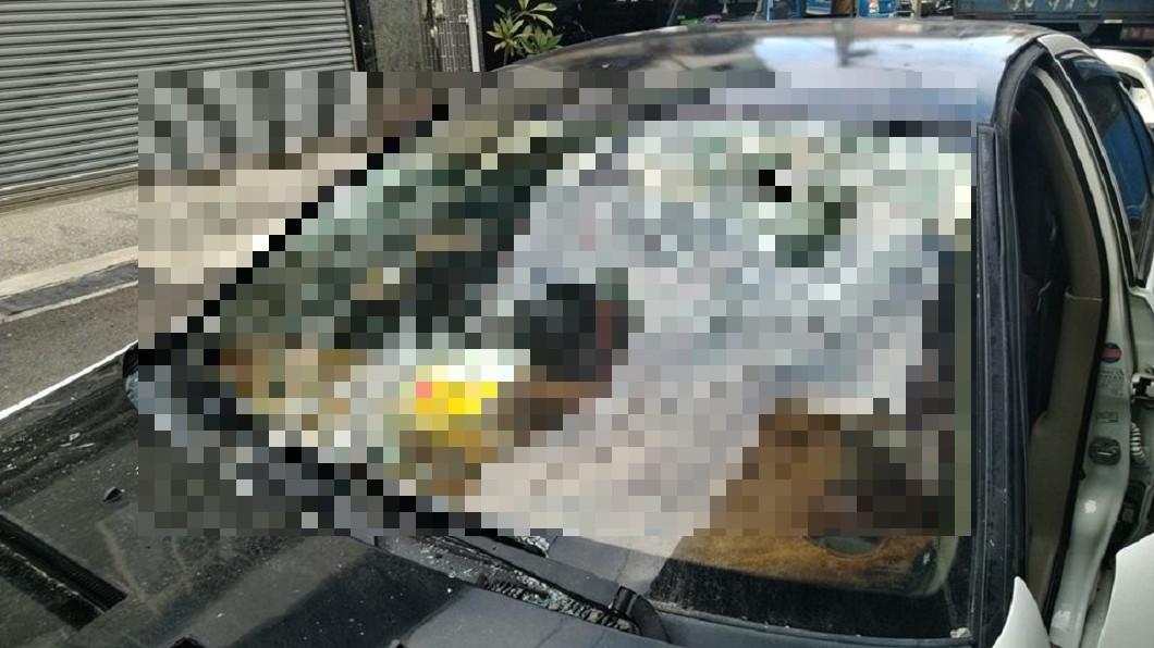 圖/爆廢公社 鴿子撞擋風玻璃「破大洞」 網驚:鐵頭鴿4ni?