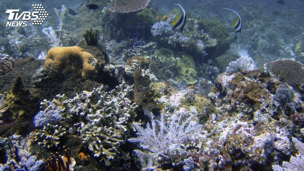 圖/達志影像美聯社 印尼逾3成珊瑚礁狀況糟糕 生態未來引發關切